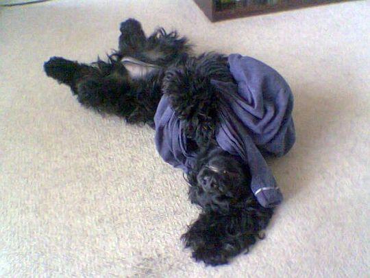 15_Jak se to pyžamo, sakra, voblíká